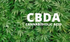 Le CBDa, un cannabinoïde mal connu
